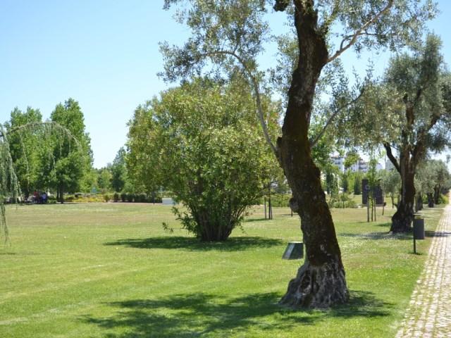 Parque de São Mateus